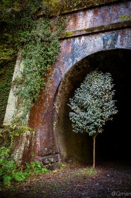 soku_31923.jpg :: 風景 レンガ 遺構 煉瓦 トンネル 鉄道 廃線 自然 山 樹木