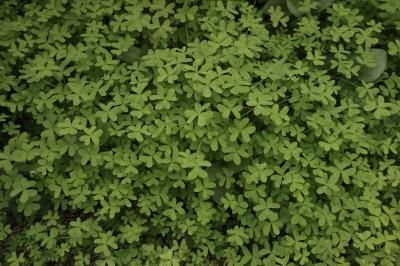soku_31928.jpg :: 植物 草葉