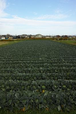 soku_31946.jpg :: 風景 自然 田畑 農場