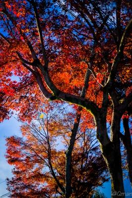 soku_31956.jpg :: 風景 自然 紅葉