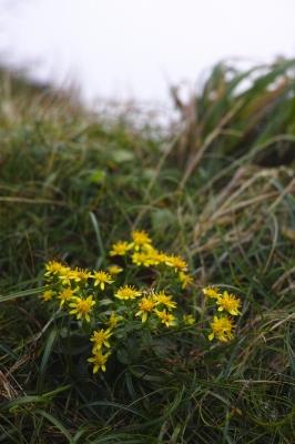soku_31959.jpg :: 植物 花 黄色い花