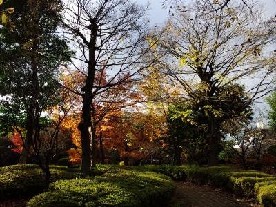 soku_31963.jpg :: 風景 自然 紅葉 赤い紅葉