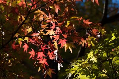 soku_32045.jpg :: 風景 自然 紅葉
