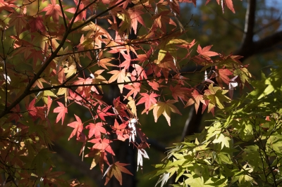 soku_32055.jpg :: 風景 自然 紅葉