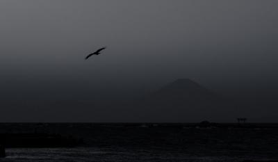 soku_32070.jpg :: 動物 鳥 野鳥 自然の鳥 風景 自然 山 富士山