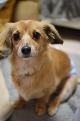 soku_32081.jpg :: 犬 おすわり 動物 ペット