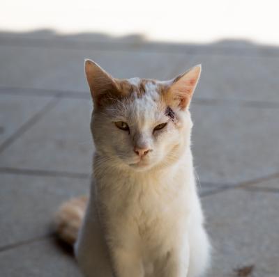 soku_32150.jpg :: 動物 哺乳類 猫 ネコ