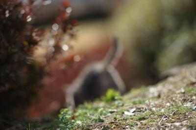 soku_32175.jpg :: 135ZA 風景 自然 動物 哺乳類 猫 ネコ