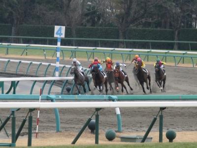 soku_32204.jpg :: canon A720IS 競馬 中山競馬場 動物 馬
