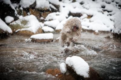 soku_32226.jpg :: 動物 哺乳類 猿 サル 地獄谷野猿公苑 温泉