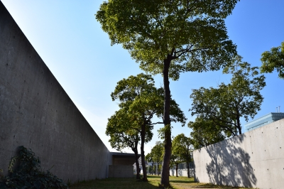 soku_32230.jpg :: 風景 街並み 都市の風景 樹木