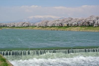 soku_32247.jpg :: 植物 花 桜 サクラ 風景 自然 川 河川