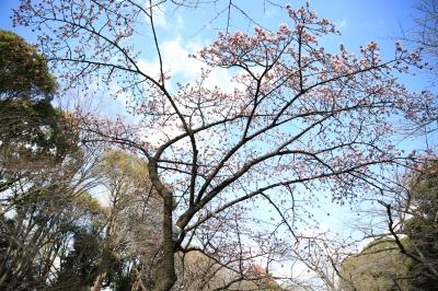soku_32324.jpg :: 植物 花 梅 ウメ