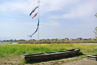 soku_32345.jpg :: 菜の花 鯉のぼり 新潟県