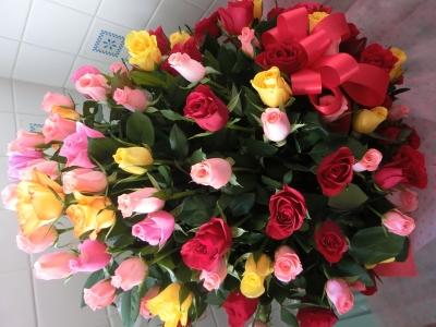 soku_32351.jpg :: 植物 花 薔薇 バラ