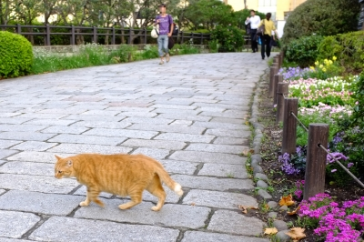 soku_32352.jpg :: 動物 哺乳類 猫 ネコ 野良猫 日比谷公園 公園