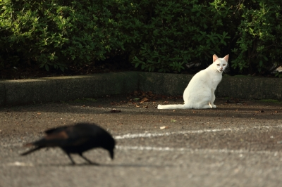 soku_32356.jpg :: 動物 哺乳類 猫 ネコ 野良猫