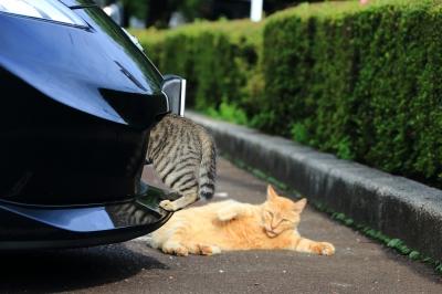 soku_32357.jpg :: 動物 哺乳類 猫 ネコ 野良猫