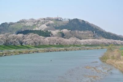 soku_32363.jpg :: 宮城県 一目千本桜 鳥 風景 自然 川 河川