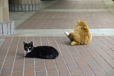 soku_32368.jpg :: 動物 哺乳類 猫 ネコ 野良猫
