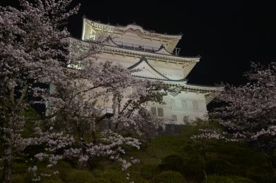 soku_32490.jpg :: 植物 花 桜 サクラ 夜桜 建築 建造物 城