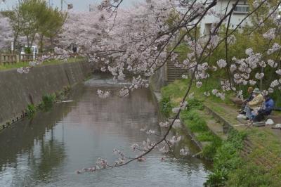 soku_32496.jpg :: 植物 花 桜 サクラ