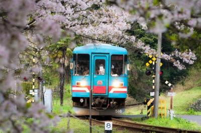 soku_32511.jpg :: 植物 花 桜 サクラ 風景 乗り物 交通 鉄道 電車 ミニチュア風