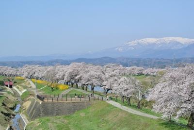 soku_32515.jpg :: 大河原 船岡 一目千本桜