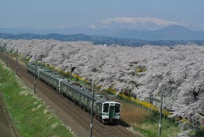 soku_32518.jpg :: 大河原 船岡 一目千本桜 東北本線
