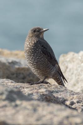 soku_32526.jpg :: 動物 鳥 野鳥 自然の鳥