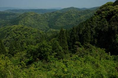 soku_32566.jpg :: 風景 自然 山 植物 草葉 新緑