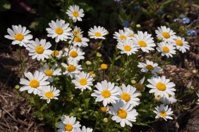 soku_32570.jpg :: 植物 花 白い花