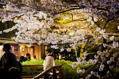 soku_32585.jpg :: 植物 花 桜 サクラ 夜桜 満開 井の頭公園