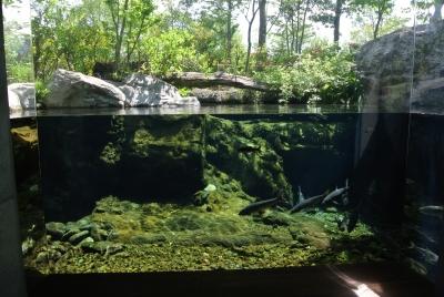 soku_32598.jpg :: 栃木県 なかがわ水遊園 動物 魚類 淡水魚