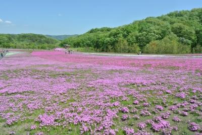 soku_32600.jpg :: 栃木県 芝桜公園 風景 自然 草原 花畑