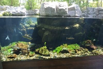 soku_32610.jpg :: 栃木県 なかがわ水遊園 動物 魚類 淡水魚