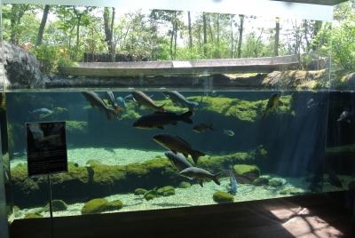 soku_32611.jpg :: 栃木県 なかがわ水遊園 動物 魚類 淡水魚