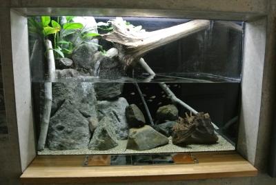 soku_32613.jpg :: 栃木県 なかがわ水遊園 動物 魚類 淡水魚