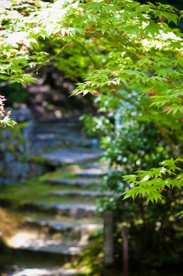 soku_32655.jpg :: 風景 自然 紅葉 植物 草葉 新緑
