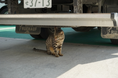 soku_32679.jpg :: 動物 哺乳類 猫 ネコ