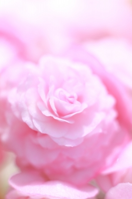 soku_32715.jpg :: 植物 花 by Niigata ハイキー