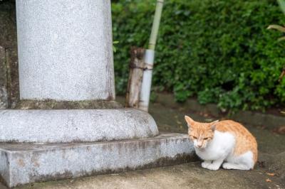 soku_32734.jpg :: 動物 哺乳類 猫 ネコ