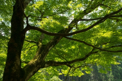 soku_32736.jpg :: 植物 草葉 新緑
