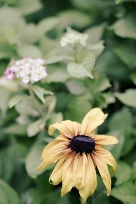soku_32754.jpg :: 植物 花 Sonnar T* 135mm F1.8 ZA SAL135F18Z