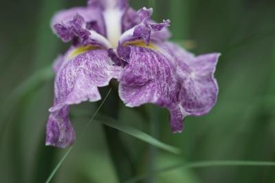 soku_32757.jpg :: 植物 花 Sonnar T* 135mm F1.8 ZA SAL135F18Z