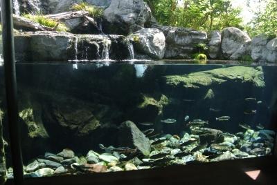 soku_32765.jpg :: 栃木県 なかがわ水遊園