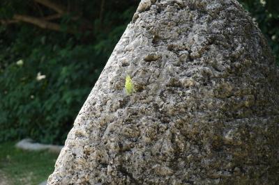 soku_32798.jpg :: 地面 土 石 岩 植物 草葉 芽