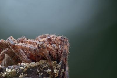 soku_32804.jpg :: α7II 動物 虫 昆虫 蜘蛛 クモ