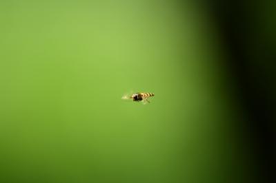 soku_32897.jpg :: D7200 羽虫 虫 昆虫