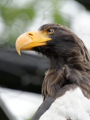 soku_32938.jpg :: D800E 70.200 動物 鳥 猛禽類 鷹 タカ